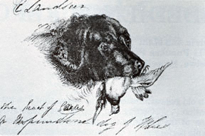 The Head of Caesar, a Newfoundland Dog by Sir Edwin Landseer